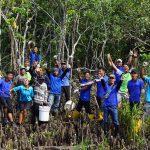 Celebrating Mangrove